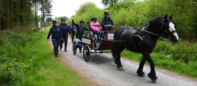 Accessible holidays: Carriage Driving