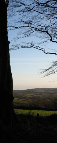 looking through trees to the rolling hills of dartmoor