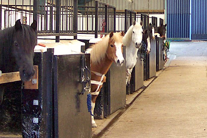 happy horses in stables, looking over stable doors