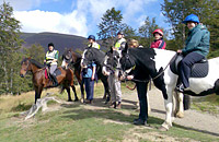 Horses on Latrigg